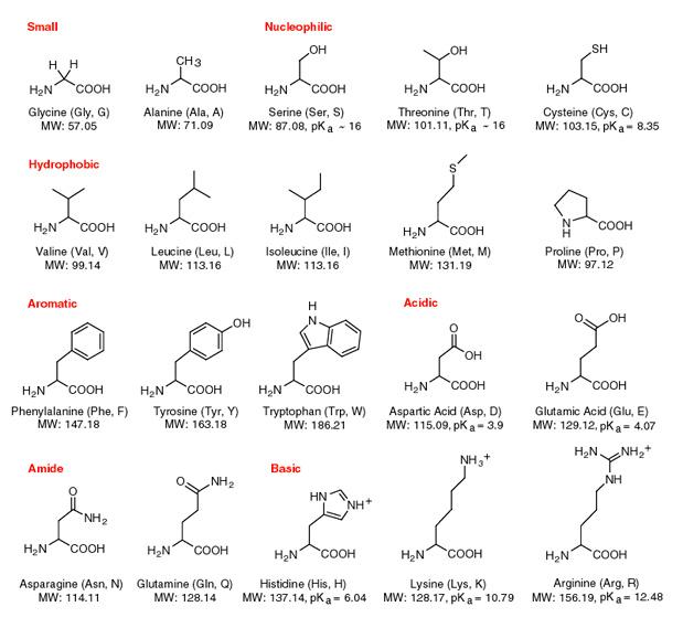 amino acids proteins. Black Bedroom Furniture Sets. Home Design Ideas